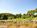 Agios Leon Zakynthos | Griekenland | De Griekse Gids nr5 - Foto van De Griekse Gids