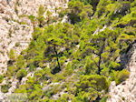 Bij de grotten van Keri | Zakynthos | foto 10 - Foto van De Griekse Gids